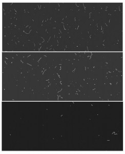 One hour exposures of CCD at sea level (top), at 350 feet underground (middle), and underground with lead shielding (bottom). The straight line signature of cosmic ray muons disappears underground. With shielding, the scattering from background radiation decreases, limiting the wiggly tracks and dots. A dark matter interaction would look like a white dot on these images.
