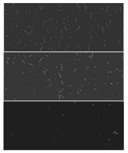 Snapshots: One-hour exposures of a CCD at sea level (top), at 350 feet underground (middle), and underground with lead shielding (bottom). The straight line signature of cosmic ray muons disappears underground. With shielding, the scattering from background radiation decreases, limiting the wiggly tracks and dots. A dark matter interaction would resemble a white dot on these images.
