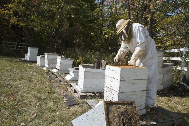 Image: Beehive 1