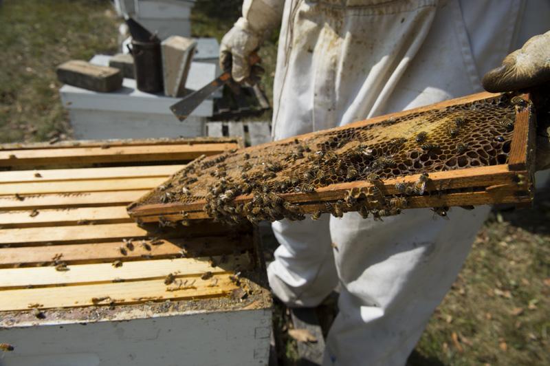 Photo of beehive