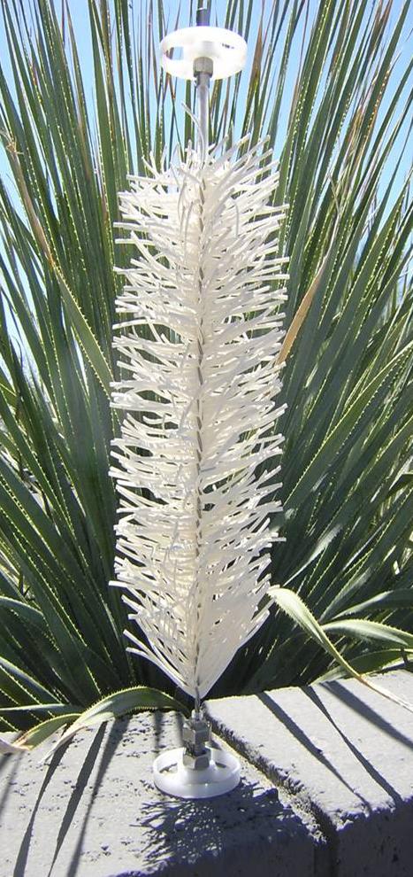 Photo of Lackner tree