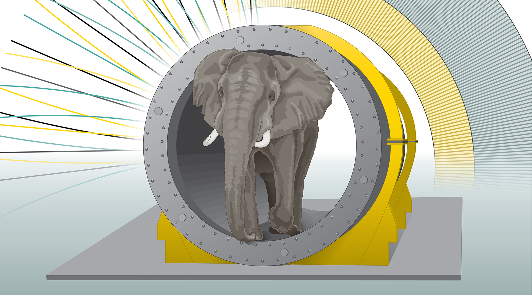 Illustration of Elephant magnet