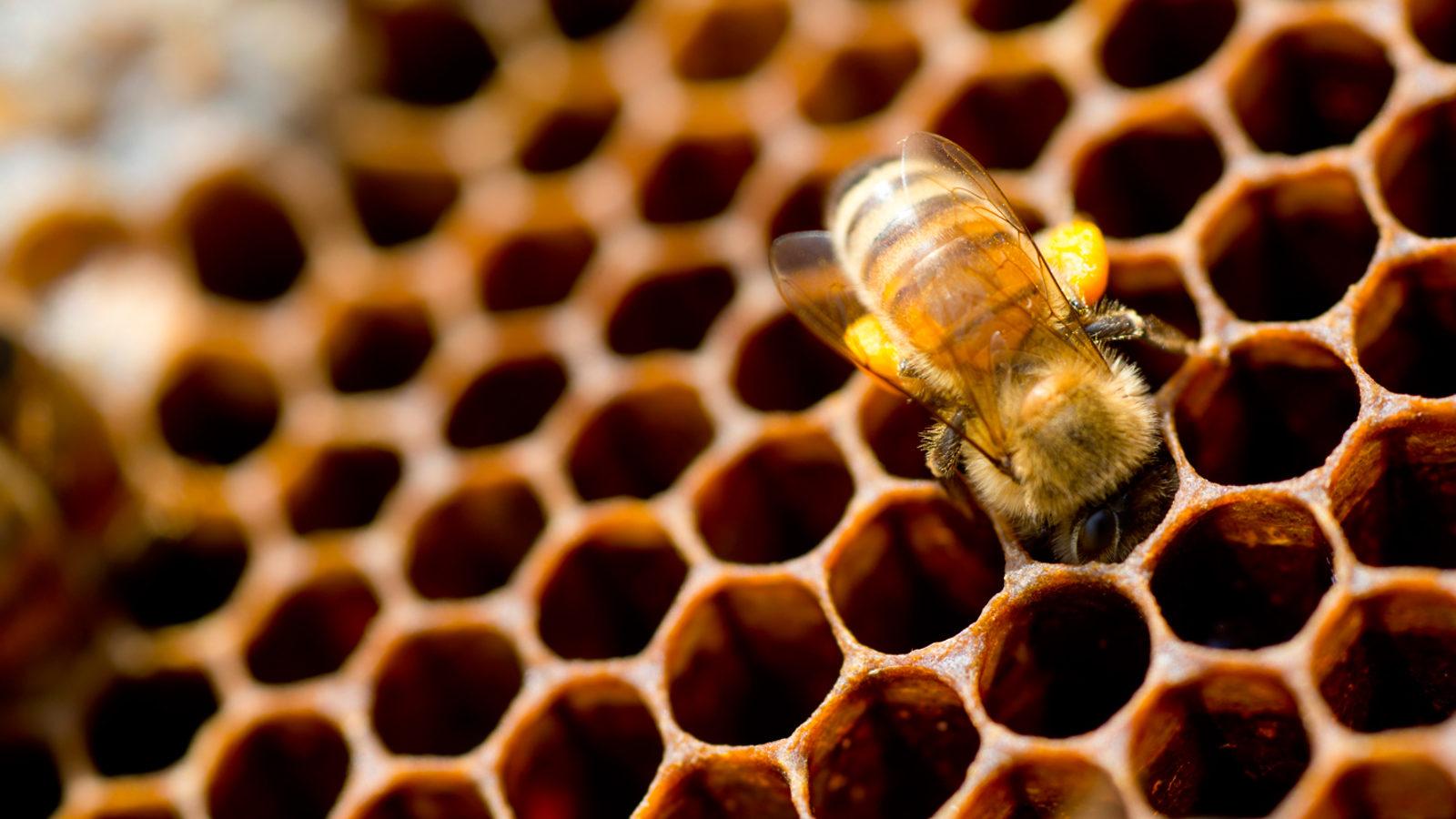 Image: Acc App Beehives
