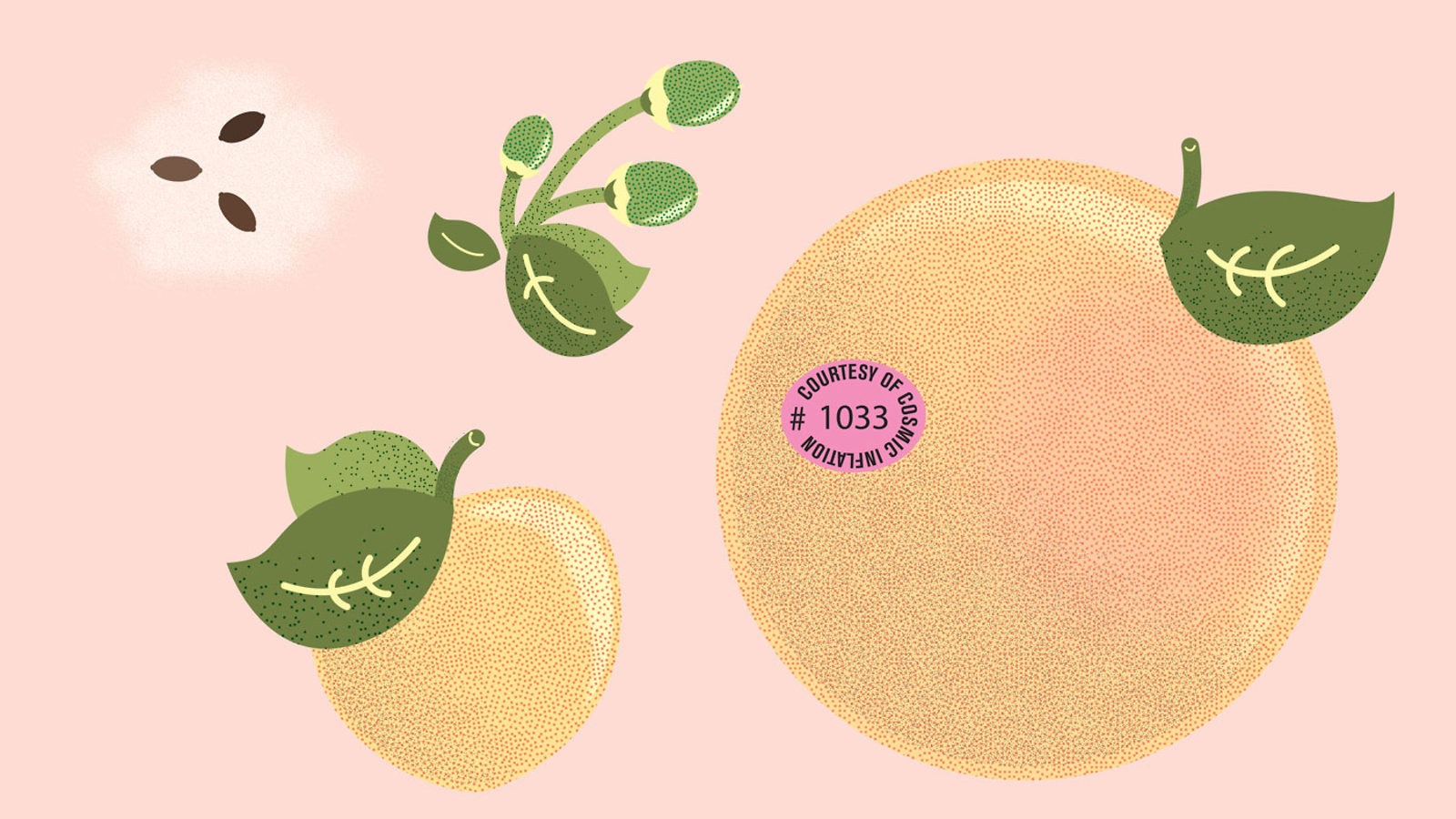 Illustration of peaches or oranges with pink background