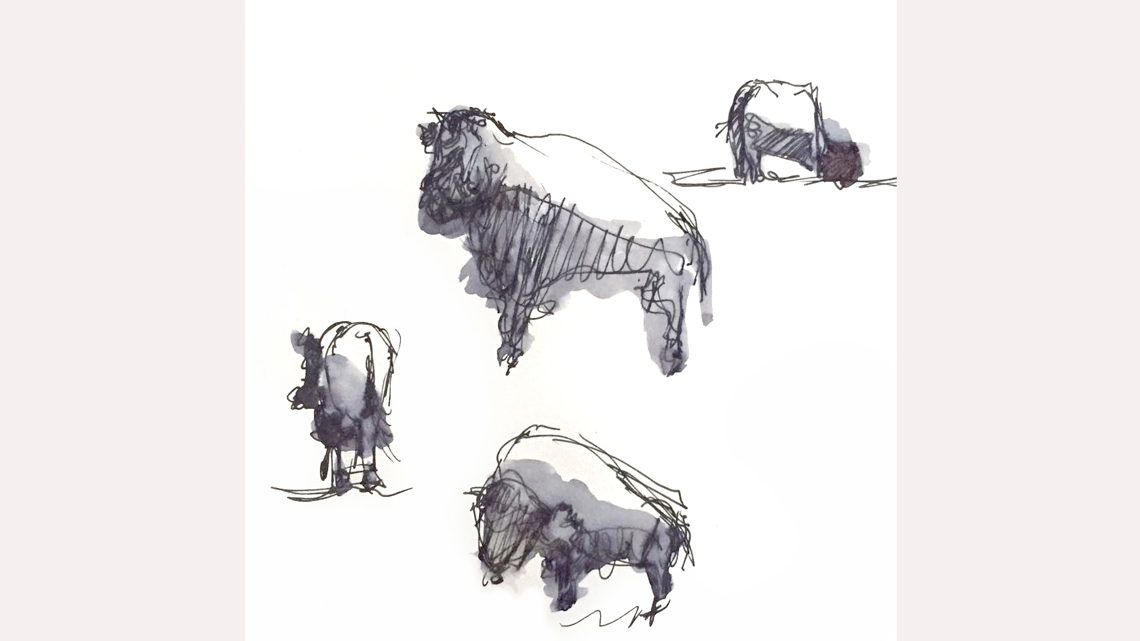 Sketches of bison