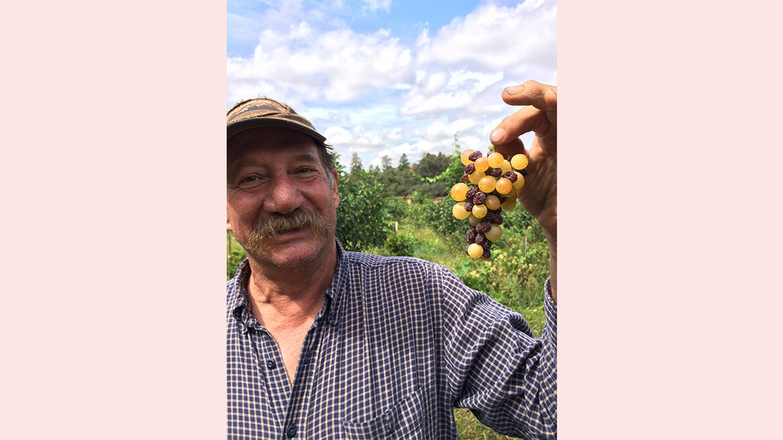 Pasner's dad holds a bunch of grapes from the farm