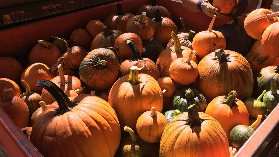 A load of pumpkins from the farm