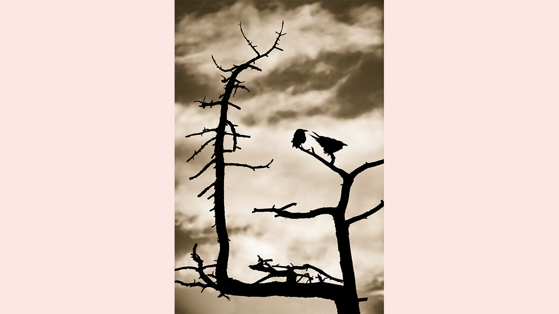 Silhouette of birds sitting on tree