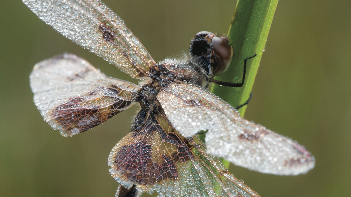 Image of a Dragonfly photograph