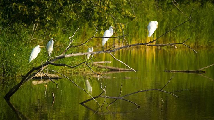 S2B: Environmental Stewardship, Header 2